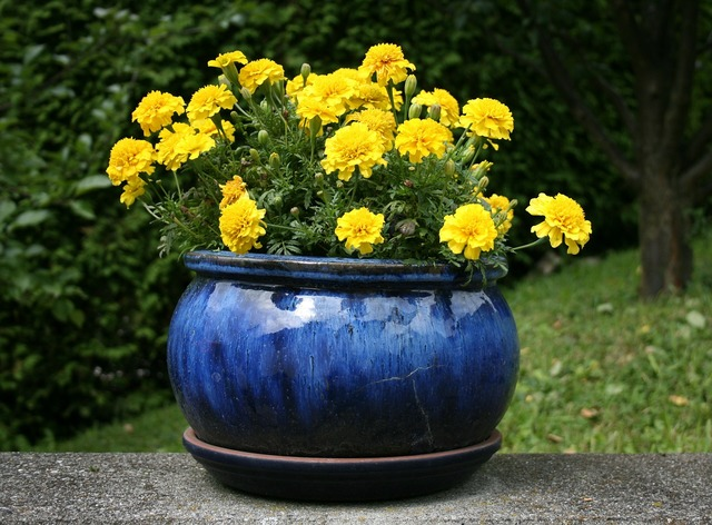 Flowers flowerpot yellow, nature landscapes.