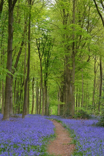 Flowers forest beech wood, nature landscapes.