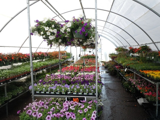 Flowers greenhouse colorful, nature landscapes.