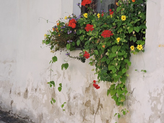 Flowers house wall window, architecture buildings.