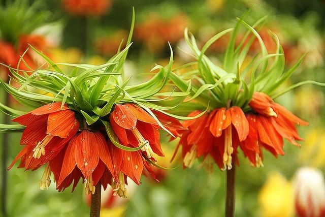 Flowers keukenhof nature, nature landscapes.