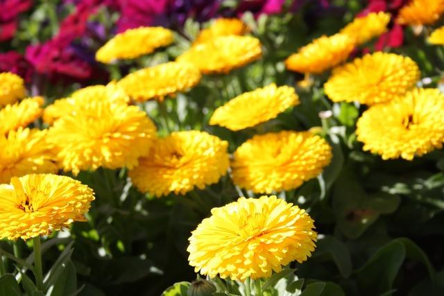 Flowers macro floral.