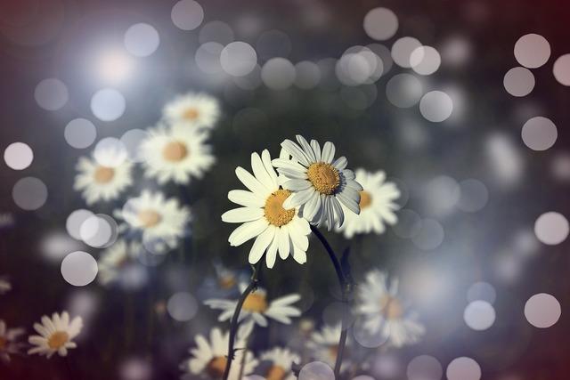 Flowers margaret pair.