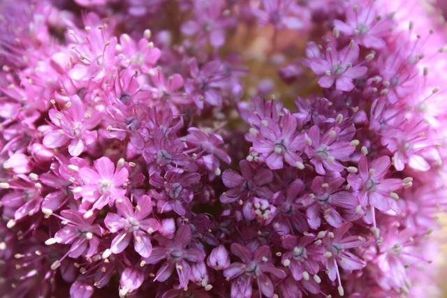 Flowers nature pink flower, nature landscapes.