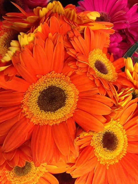 Flowers orange foliage, nature landscapes.