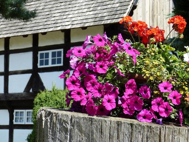 Flowers petunia geranium.