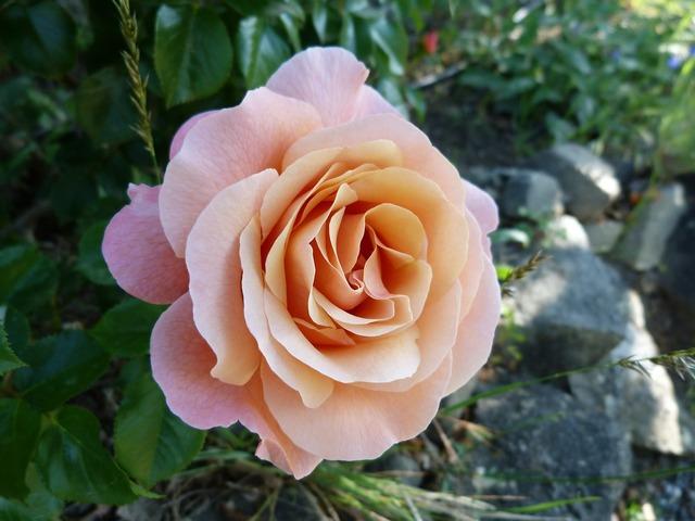 Flowers pink macro.