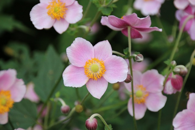 Flowers pink plant, nature landscapes.
