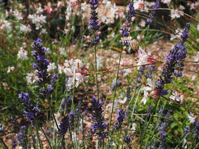 Flowers plant blue, nature landscapes.