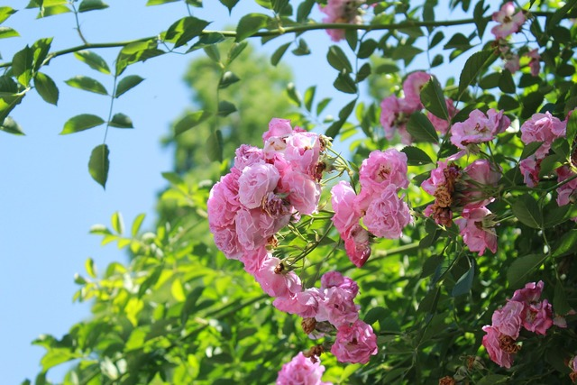 Flowers plant sunshine, nature landscapes.