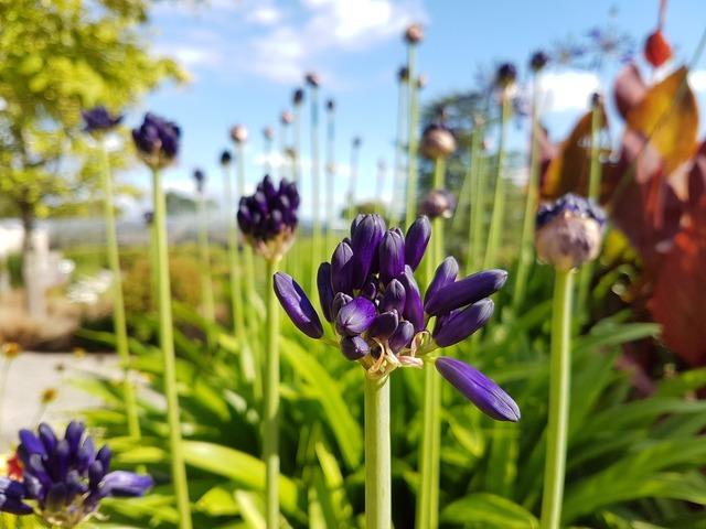 Flowers purple purple flower.