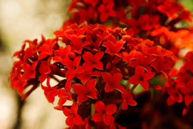 Flowers red garden, nature landscapes.