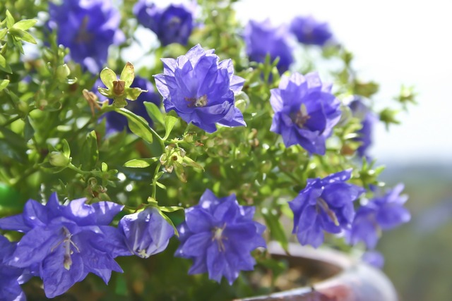 Flowers summer flowers purple.