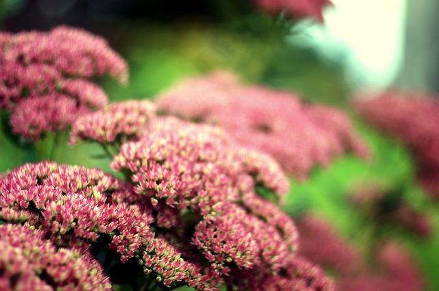Flowers summer macro.