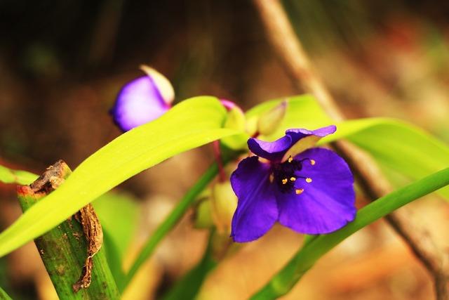 Flowers violet pine-mushrooms, nature landscapes.