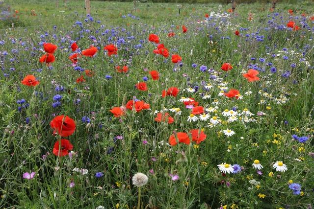 Flowers wild plants eng.