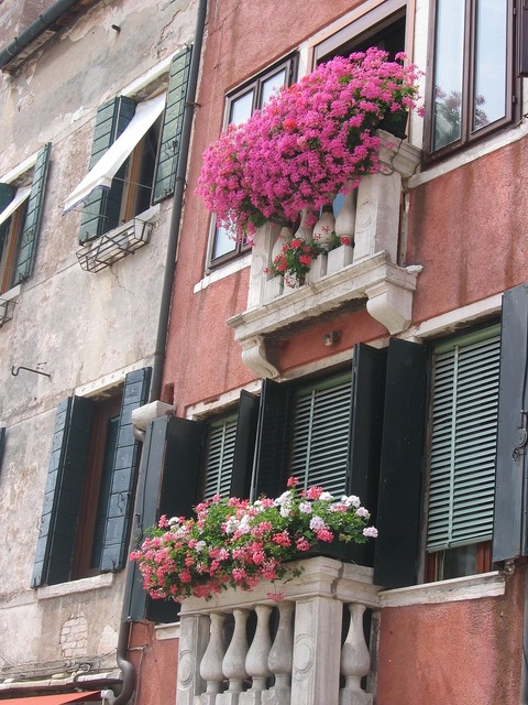 Flowers window garnished, architecture buildings.