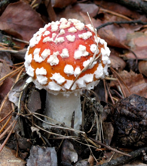 Fly agaric red amanita forest, nature landscapes.
