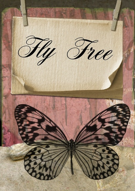 Fly butterfly card, nature landscapes.