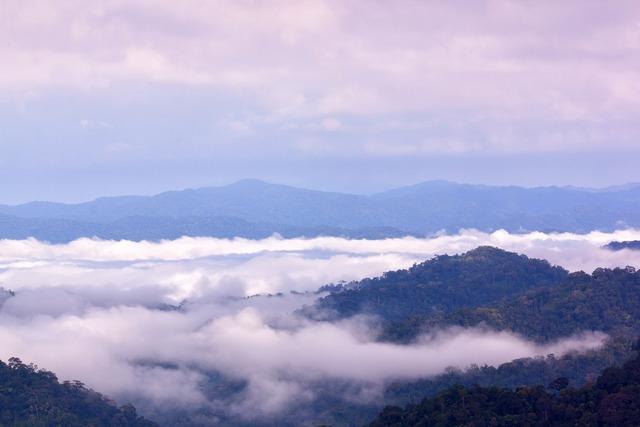 Fog mountains sea fog.