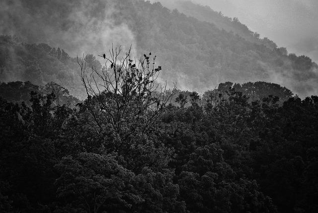 Fog mountains vultures.