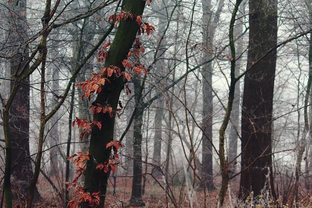 Fog nature landscape, nature landscapes.