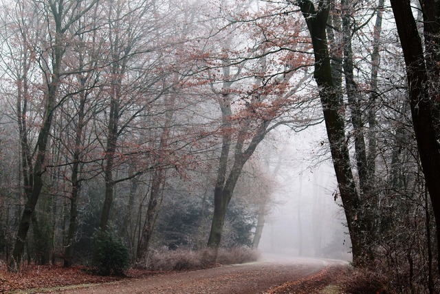 Fog park nature, nature landscapes.