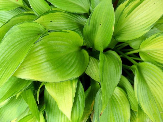 Foliage green leaves.