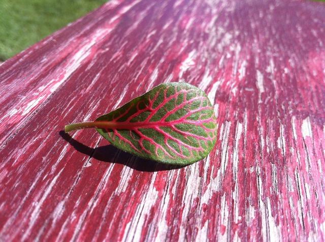 Foliage plant table, nature landscapes.