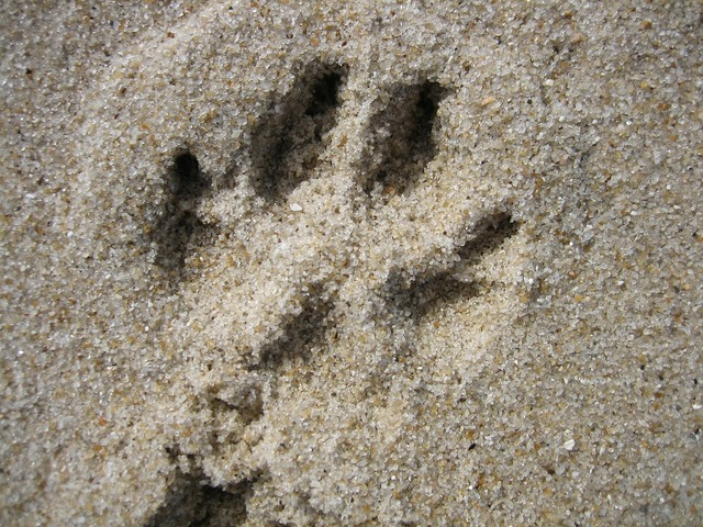 Footprint traces sand.
