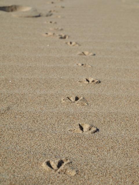 Footprints beach seagull, travel vacation.