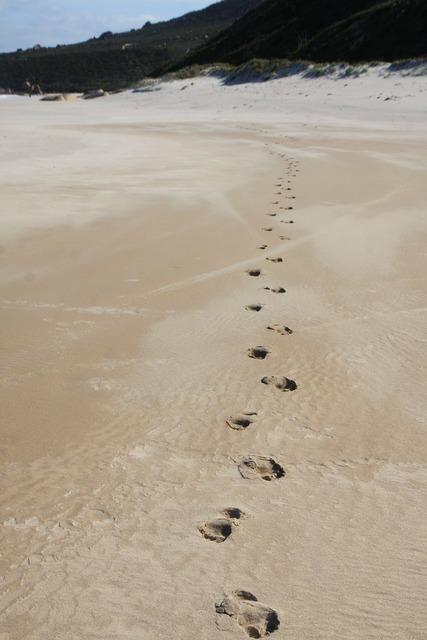 Footprints beach tracks, travel vacation.