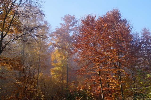 Forest autumn colorful leaves, nature landscapes.