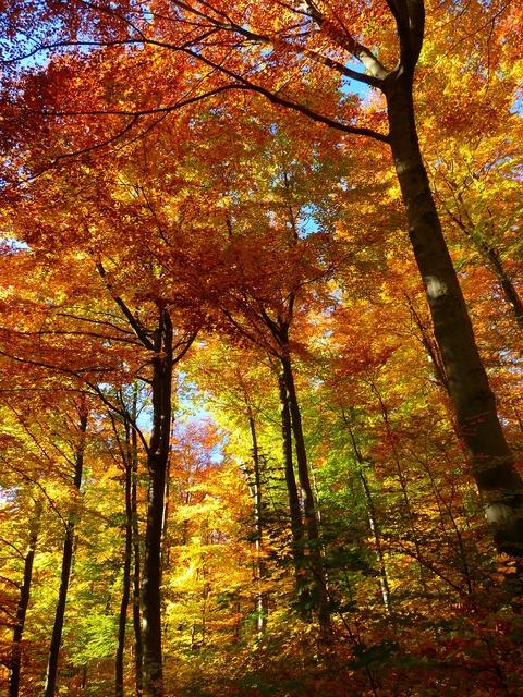 Forest autumn forest colorful, nature landscapes.