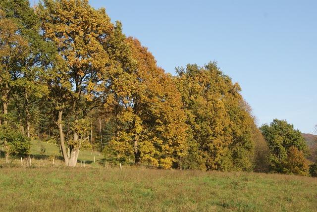 Forest autumn nature, nature landscapes.