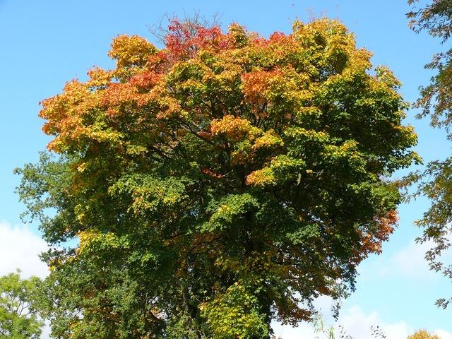 Forest autumn trees, nature landscapes.