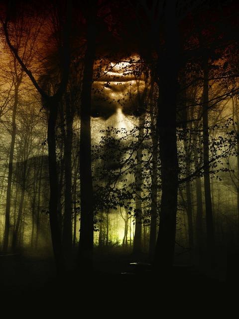 Forest face fog, nature landscapes.