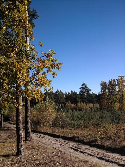 Forest foliage leaf, nature landscapes.