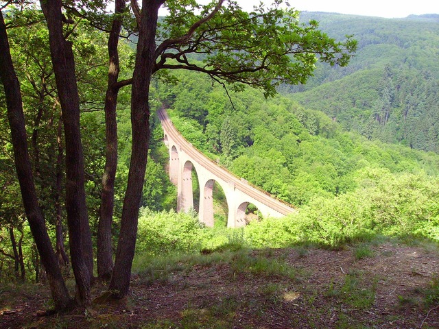 Forest glade viaduct, nature landscapes.