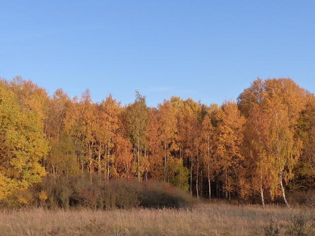 Forest leaves autumn, nature landscapes.