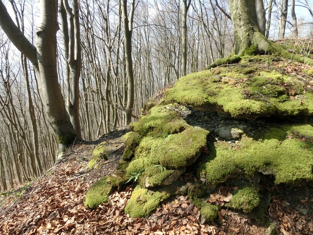 Forest mountains moss, nature landscapes.