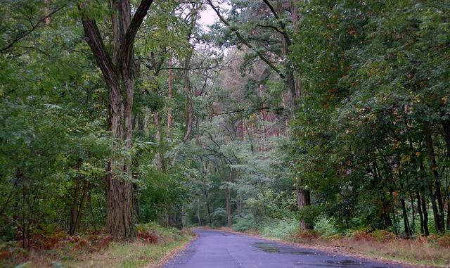 Forest old way, nature landscapes.