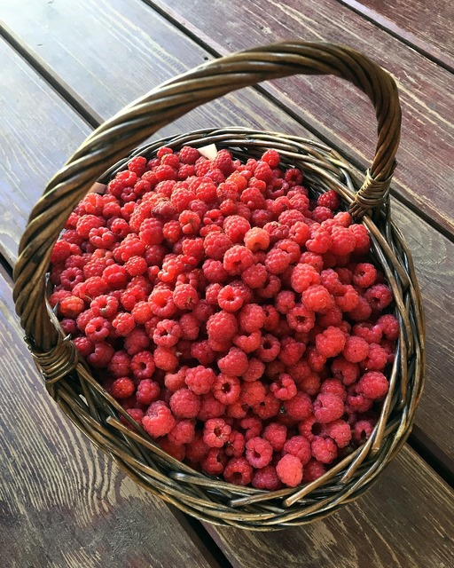 Forest raspberry basket wild raspberries, nature landscapes.