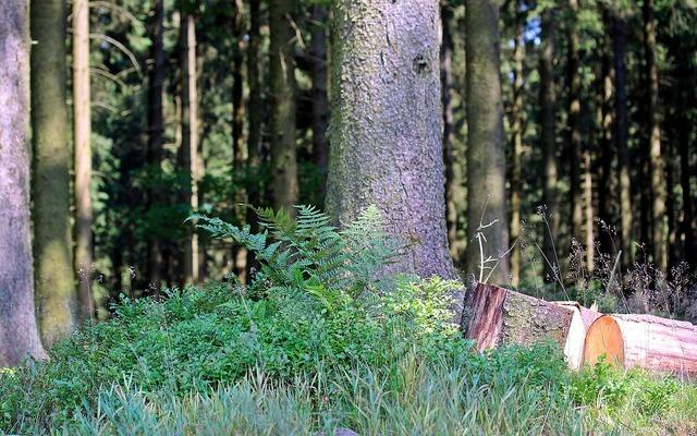 Forest strains sawn logs, nature landscapes.