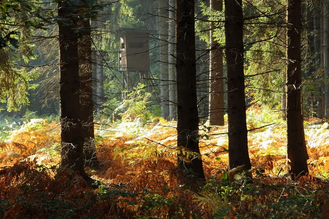 Forest trees autumn forest, nature landscapes.