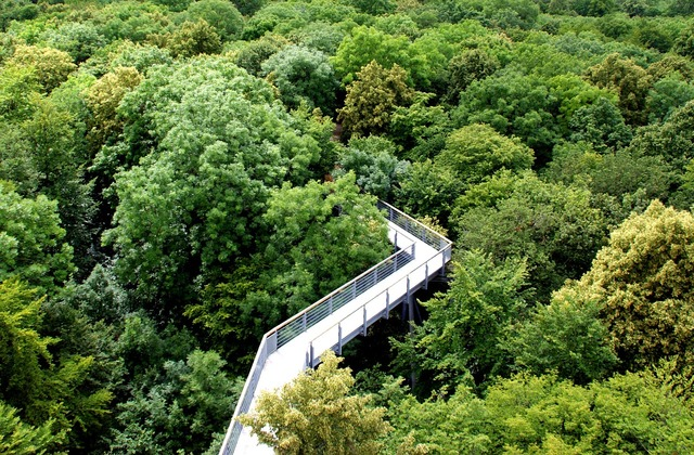 Forest ways tops green, nature landscapes.