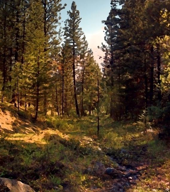 Forest woods light, nature landscapes.