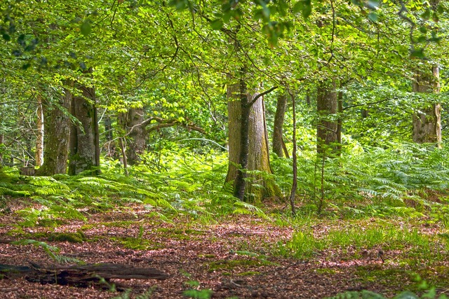 Forest woods woodland, nature landscapes.