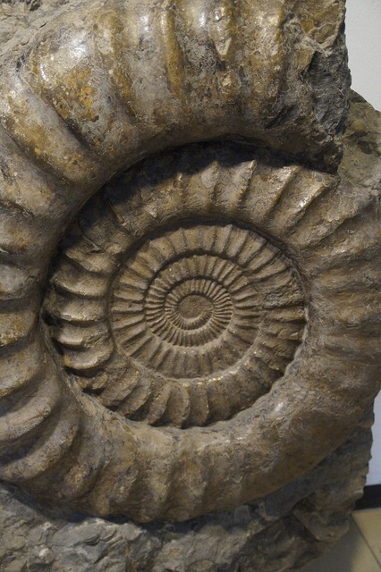 Fossil snail ammonit, science technology.