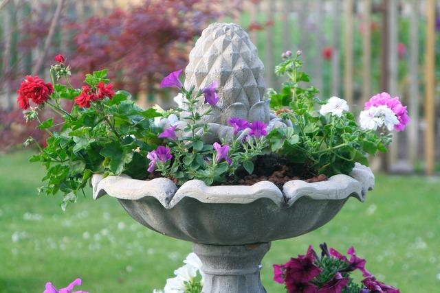 Fountain plant petunia, nature landscapes.